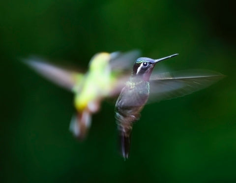How-To-Attract-Hummingbirds