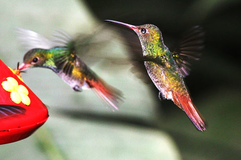 Best Tips for Attracting Hummingbirds