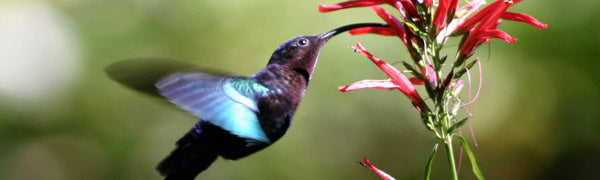 We Love Hummingbirds