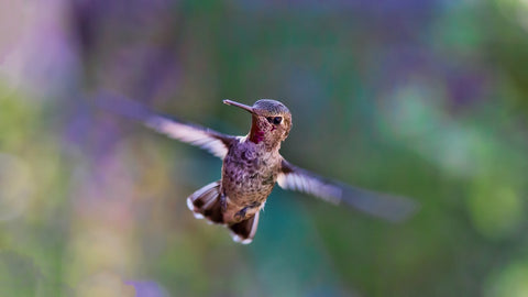 Tips to attract hummingbirds