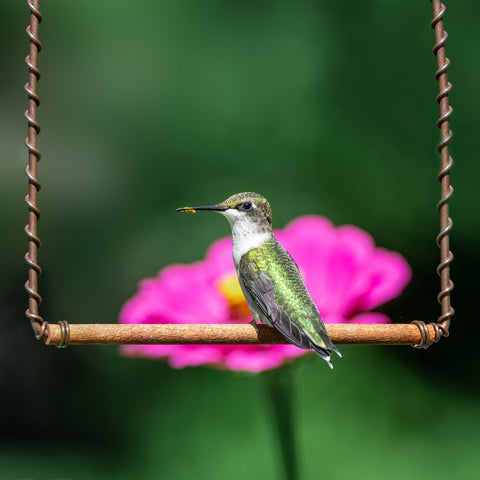 What Does It Mean When A Hummingbird Visits You