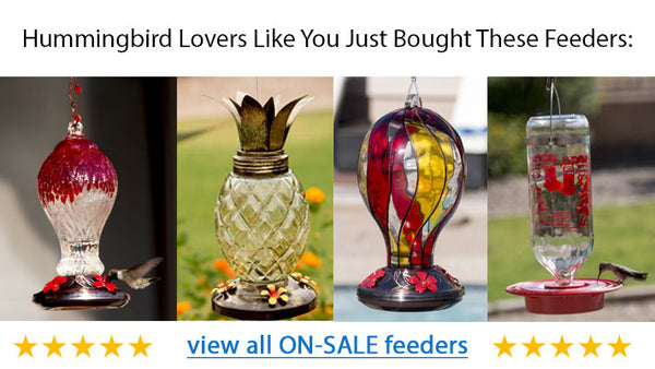 Most Popular Hummingbird Feeders
