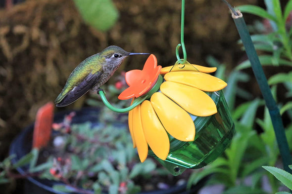 Red/Yellow Single Flower Hummingbird Feeder - (2-Pack)