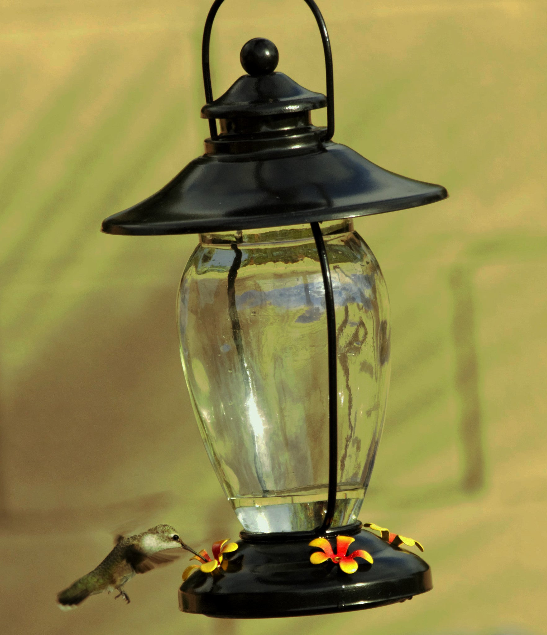 perky song hummingbird dp pet glass oz amazon window mount humingbird feeder ca mounted garden