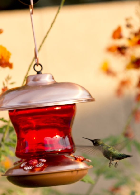 Red Glass & Copper Hummingbird Feeder - We Love Hummingbirds - 4