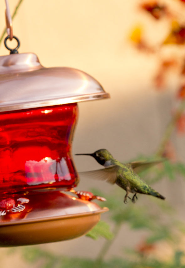 Red Glass & Copper Hummingbird Feeder - We Love Hummingbirds - 5