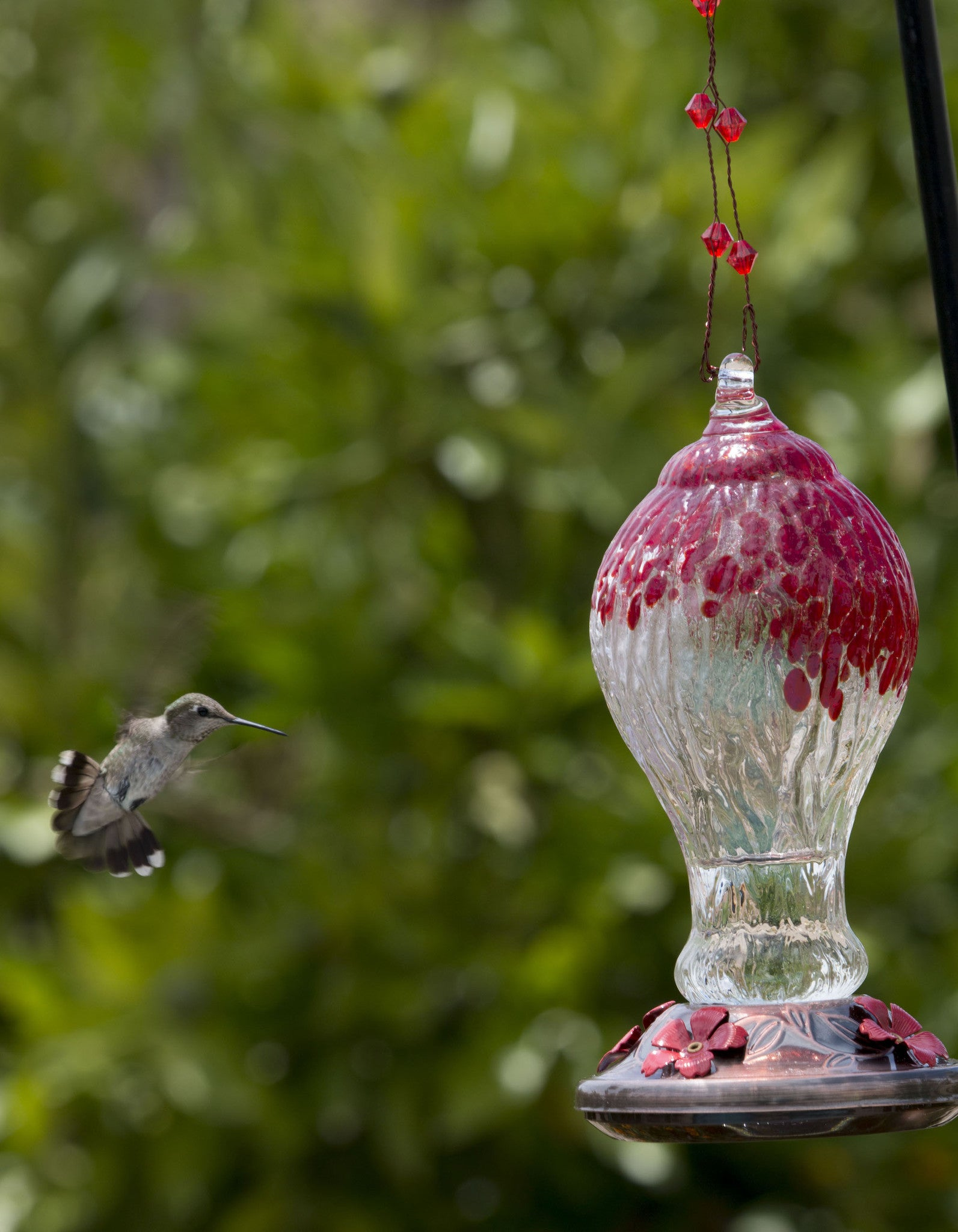 copper elegant feeder bird feeders for hummingbird sale glass