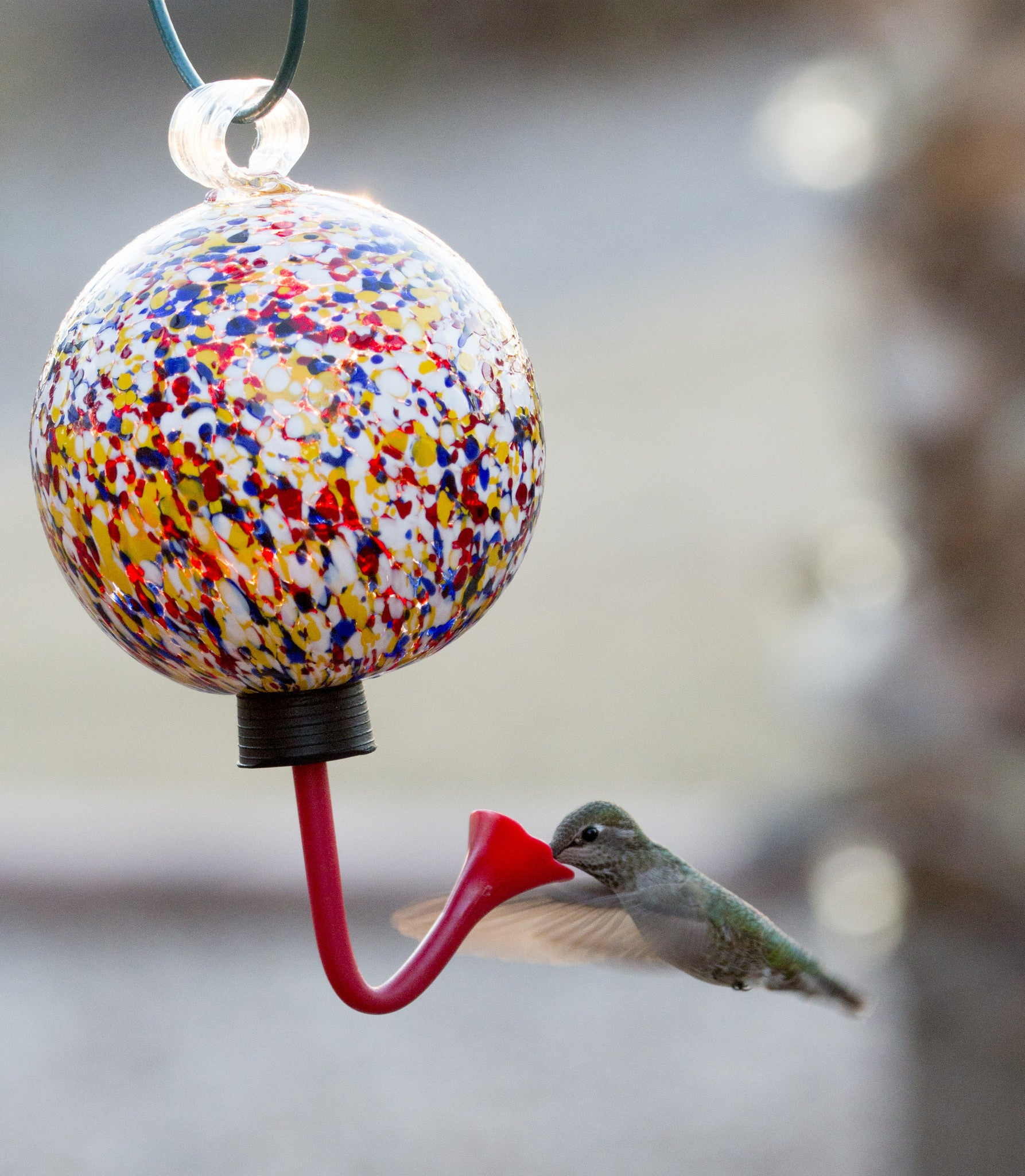 feeder real p feeders red hummingbird wings oz humingbird flower bird wild so