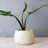 Slip Brushstroke Vessel - White with oxide