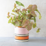 Striped Liquorice All Sorts Jumbo L Planter - Black, Dusty Pink, Indian Red & Nasturtium