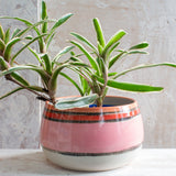 Liquorice All Sorts Bowl // Planter