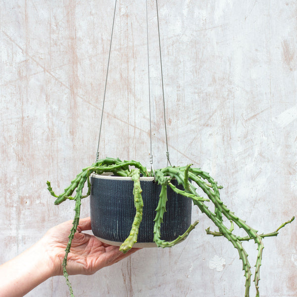 Blue Steel -  Large Hanging Planter