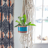 Liquorice All Sorts - Large Hanging Planter - Lagoon