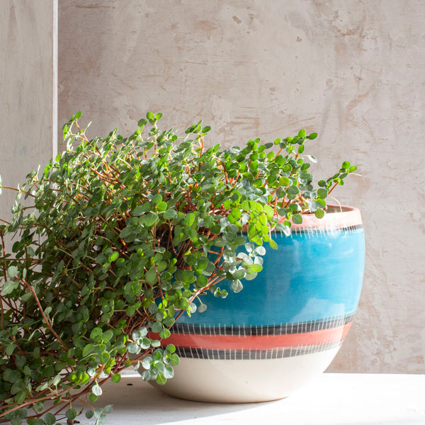 Liquorice All Sorts Bowl // Planter - Lagoon, Dusty Pink & Indian Red
