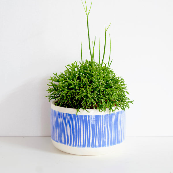 Stripey Road Planter - Electric Blue