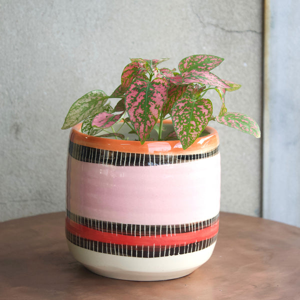 Liquorice All Sorts Medium Planter - Dusty Pink, Indian Red & Nasturtium