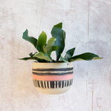 Textured Galah -  Rounded large Hanging Planter