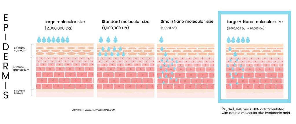 How different Hyaluronic Acid Molecular Size penetrates the skin at different depth