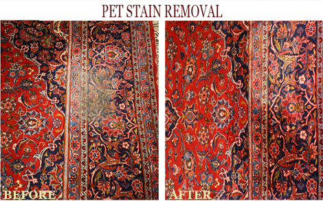 Area Rug Pet Stain Removal