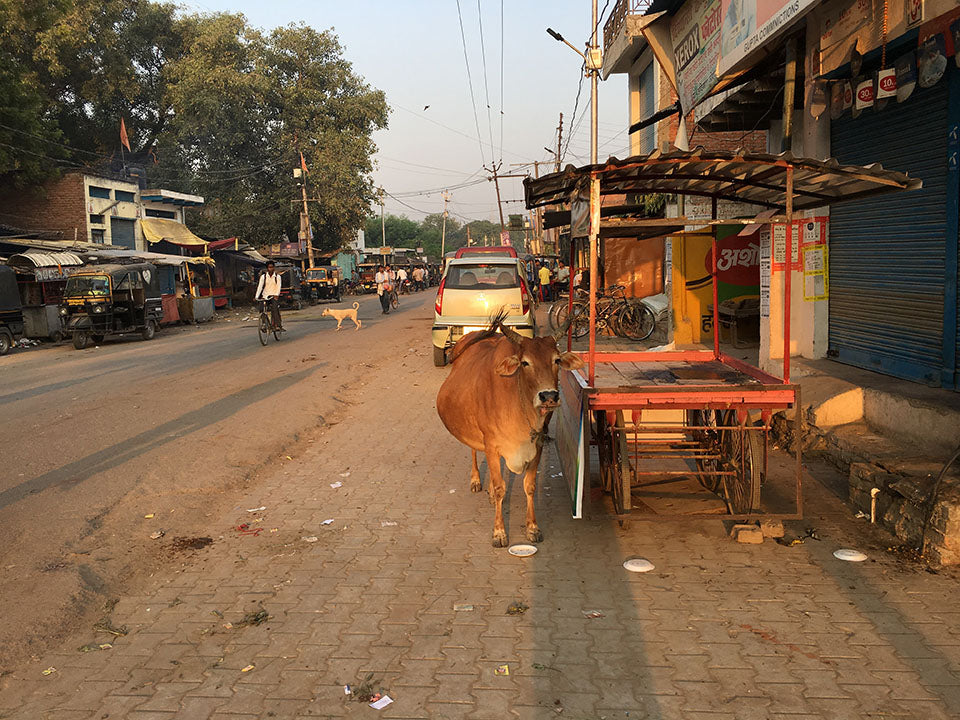 A cow in the streets of Varanasi - Main Street Oriental Rugs