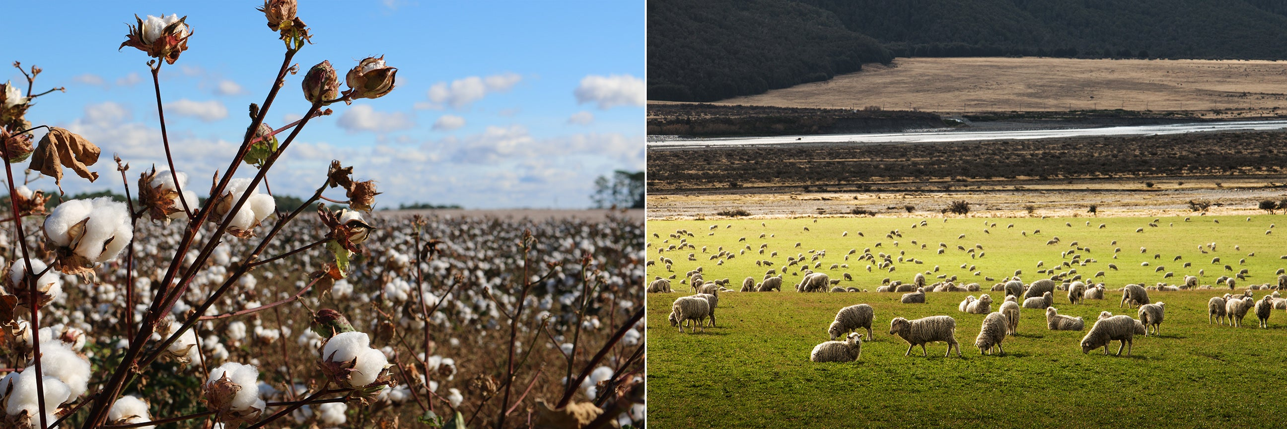 Natural fibers: cotton and sheep's wool