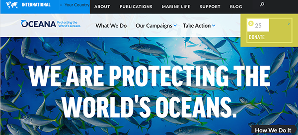 4 Reasons To Protect Our Oceans Now