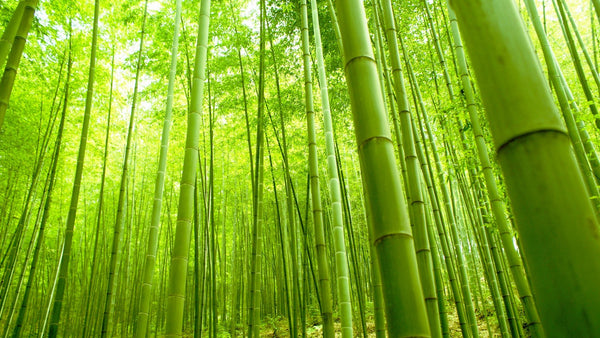 bamboo sustainability