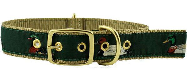 Dog Collars - Dog Collar In Green Ribbon On Khaki Canvas With Ducks By Country Club Prep