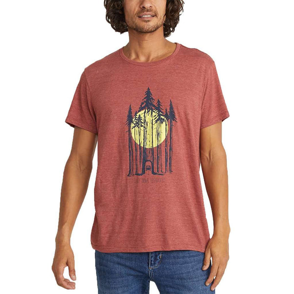 Marine Layer Redwoods Tee by Marine Layer