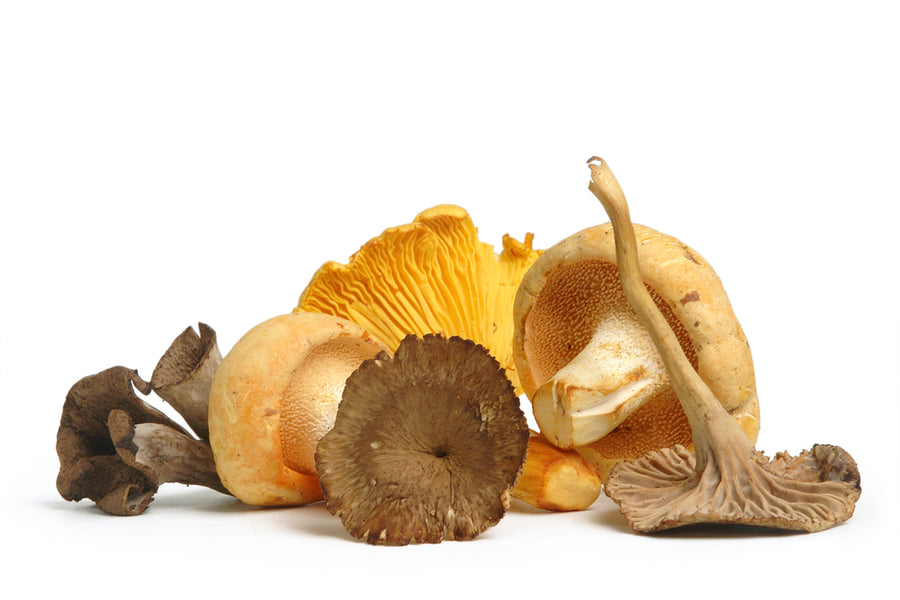 The Guide to Wild Foraged Mushrooms