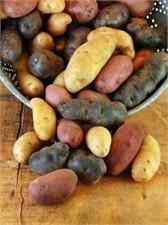 Potatoes and Squash - The unique varieties that are difficult to find