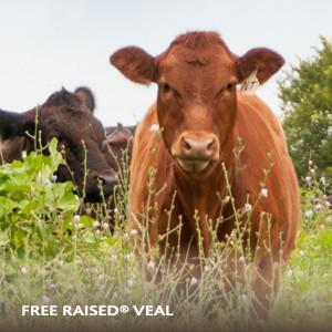 "Veal - All Natural, Free Range and ""Never Ever"" Hormones or Antibiotics Raised by Strauss Family Farmers"