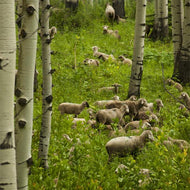 Colorado Lamb Packages