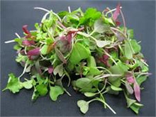 Micro Greens - Simple Way to Transform Good to Great