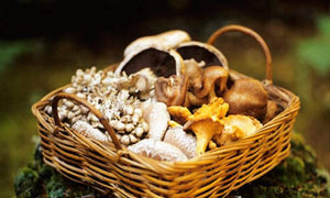 Seasonal Mushroom Package from Pacific Northwest