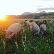 Pork - All Natural Pasture Raised  in Western Colorado