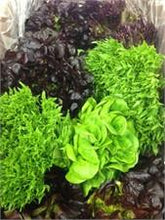 Lettuces and Greens