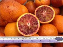 Fresh & Delicious Citrus Fruits from California