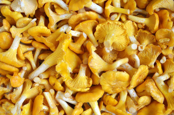Mushrooms-Seasonal Wild Foraged - Chanterelles Currently Available