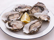 Fresh Live Oysters From the Northeast