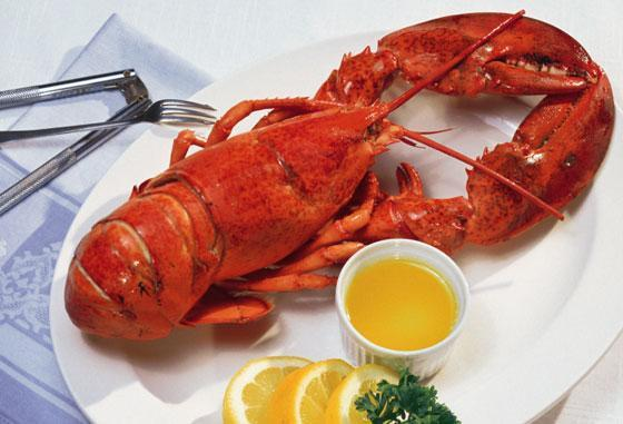 Live Lobster from Maine