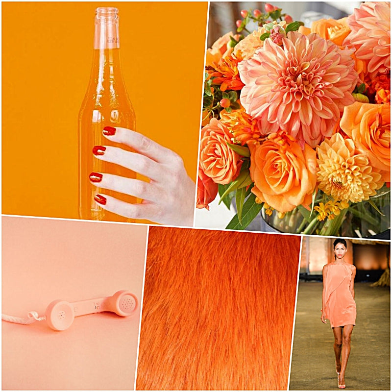 Color Craze: Orange Juice and Creamsicle on Pinterest