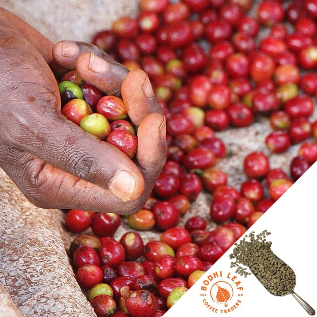 Burundi Rugori Washed - Green-Bodhi Leaf Coffee Traders
