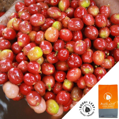 Roasted - Burundi Gahahe Washed-Bodhi Leaf Coffee Traders