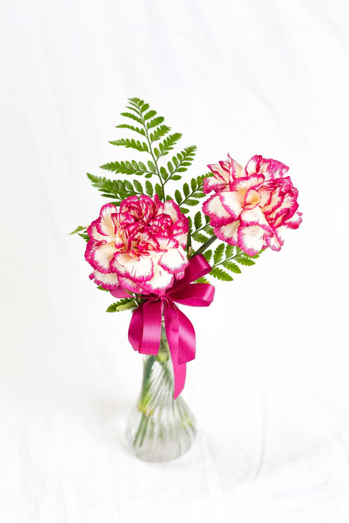 Double Carnations in Vase