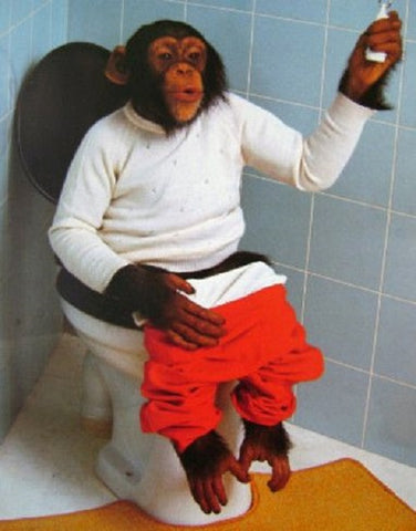 So What? Monkey On Toilet Poster 16x20