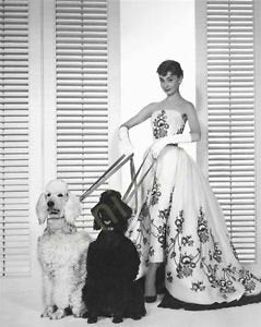Audrey Hepburn Walking Dogs B/W  8x10 Photograph