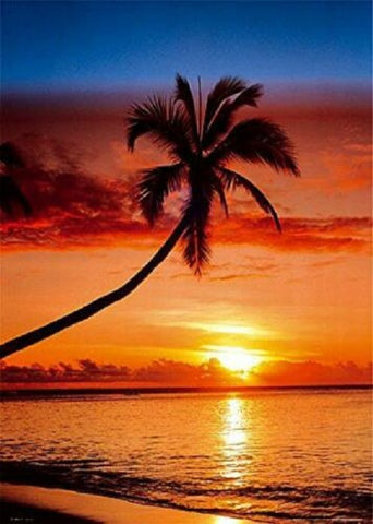 Sunset Palm Poster 16x20
