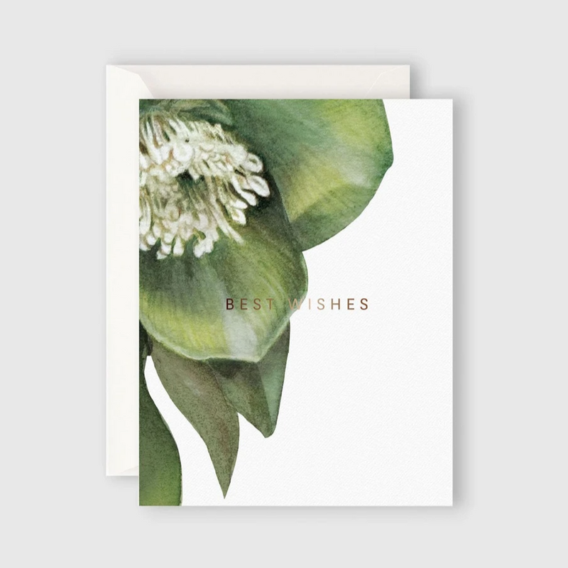 Card - Hellebore Best Wishes