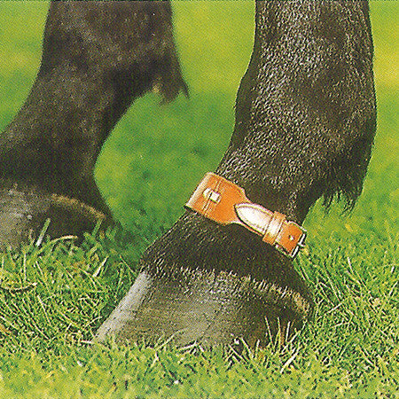 Horse Pastern Strap
